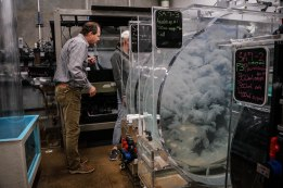 Some of these jellies will go on display - the erst will feed the other exhibits